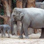 動物園やペットショップに赤ちゃんを連れて行くと免疫力アップするというのはウソ?!