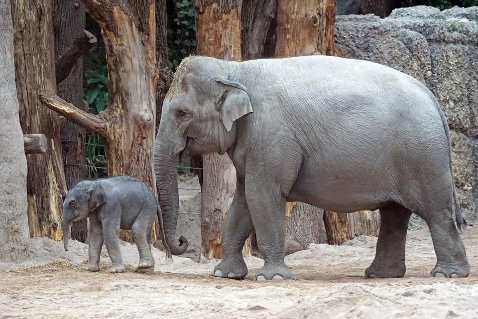 動物園で免疫力アップ